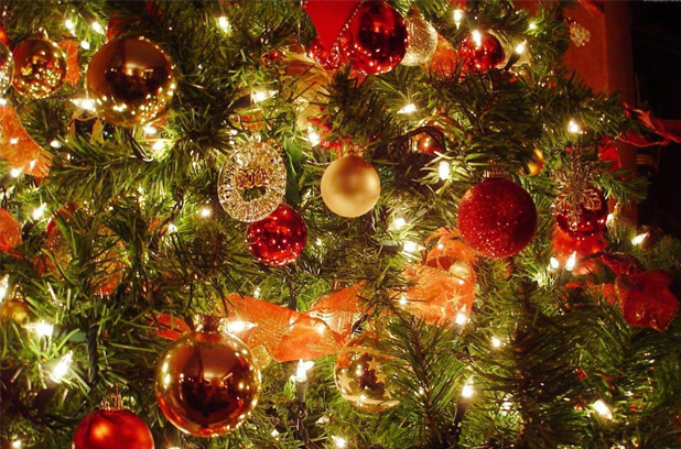 Елки к Новому году будут продавать минимум за 65 гривен
