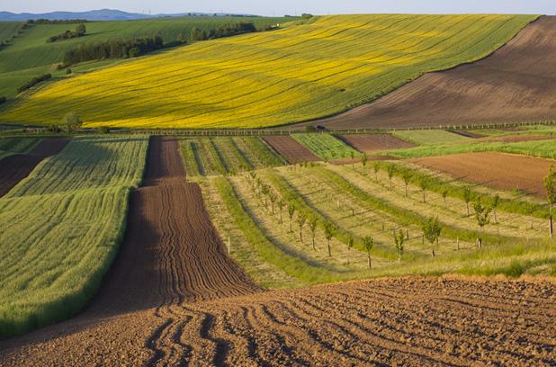Аграрии будут получать кредиты на землю в упрощенном порядке